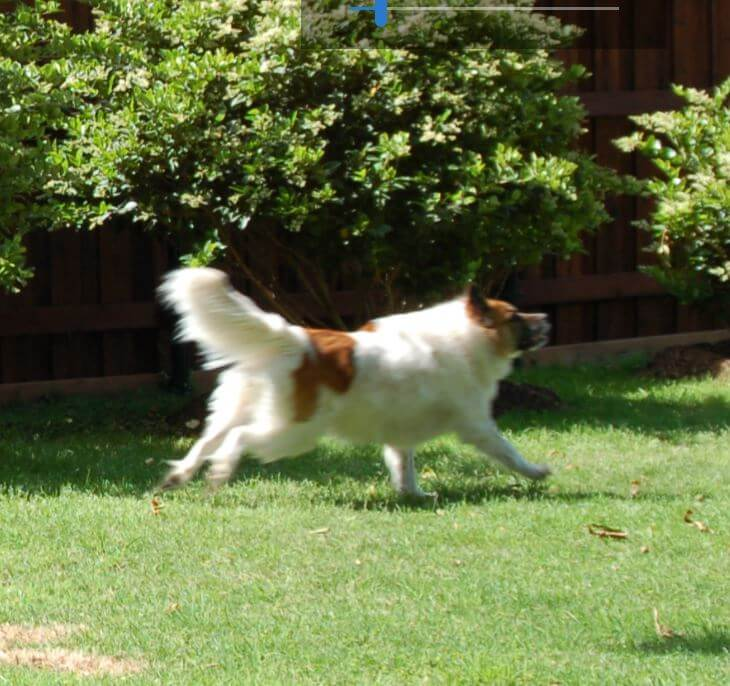 Dakota Chasing the Frisbee!!